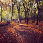 What to Do Highgate Wood in London?